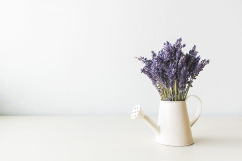 Lavender in a watering can