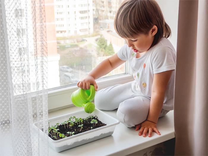 Child watering herbs on a windowsill