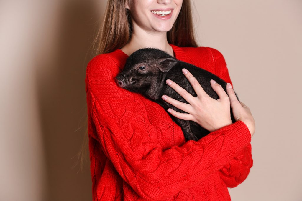 Woman holding a piglet in a red jumper to symbolise Year of the Pig Chinese New Year